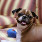 How to wash your dog – successfully!