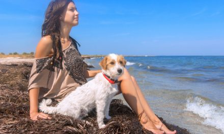 Pet-Friendly Holiday Ideas