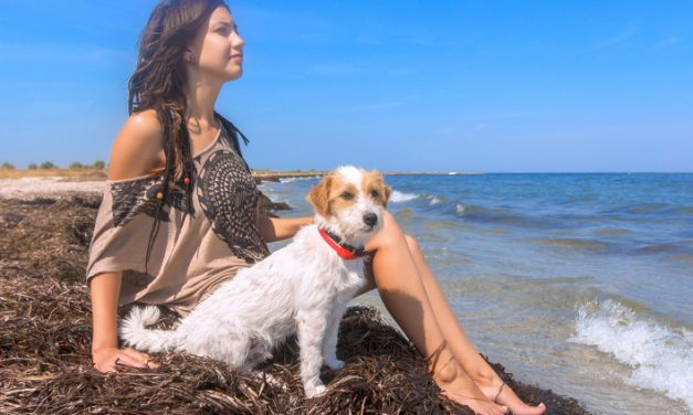 Pet-Friendly Holiday Ideas